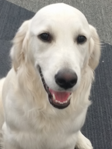 Bing the Therapy Dog