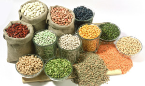 Bins of different types of seeds